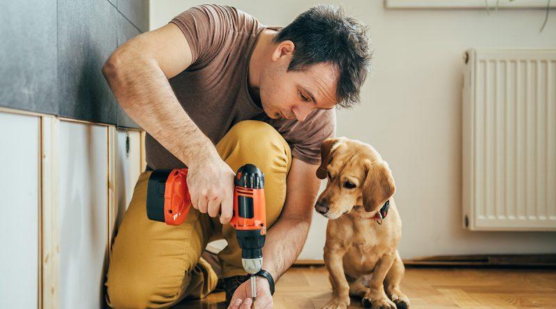 Секреты для хозяев домашних питомцев: как сохранить свежий ремонт? - Интерьер