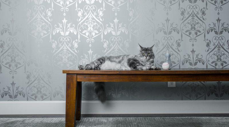 Чем декорировать интерьер если в доме живет кошка? - Интерьер