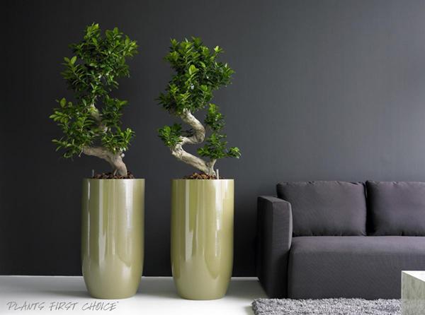 """Деревья в квартире: все """"за"""" и """"против"""""""