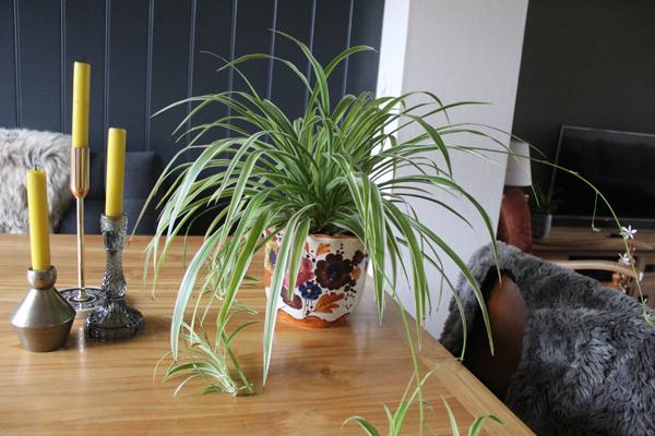 Какие цветы поставить в вазу на кухне?