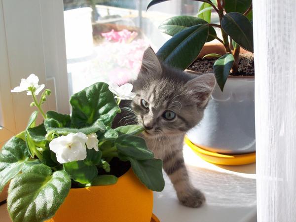 [Растения в доме] Эти растения опасны для домашних питомцев