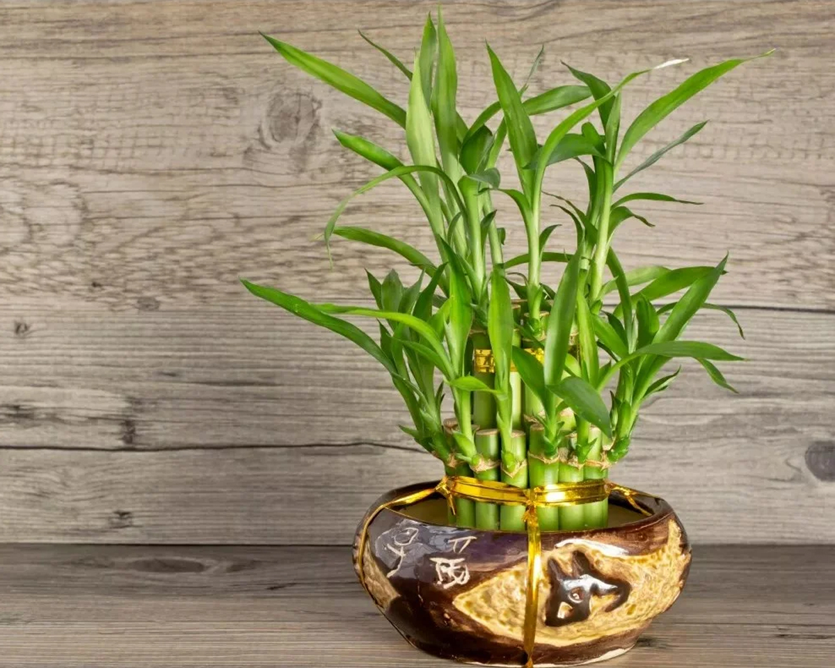 [Растения в доме] 5 комнатных цветов приносящих богатство и процветание в дом