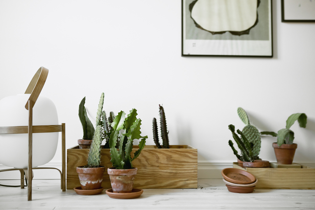 [Растения в доме] 5 комнатных растений которым не место на подоконнике