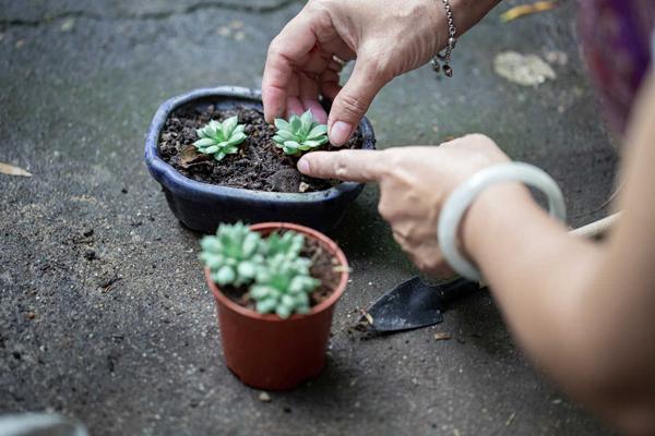 [Растения в доме] Суккуленты: живые растения для ленивых