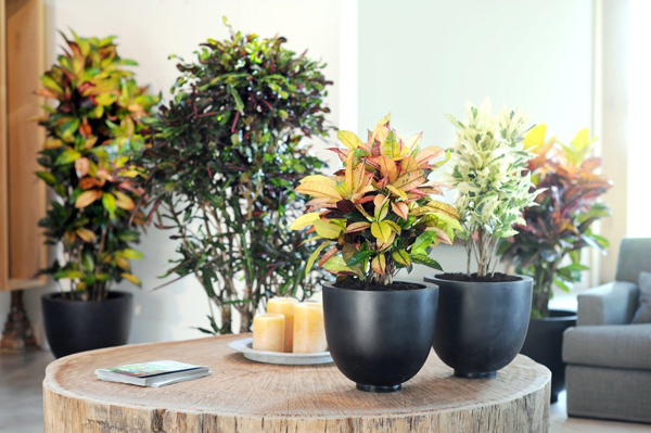 [Растения в доме] Какие комнатные цветы сейчас в моде?