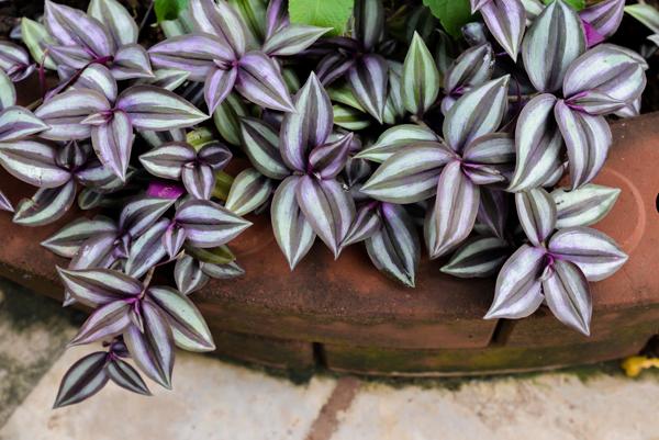 [Растения в доме] 6 домашних растений, которые берегут дом от сглаза и порчи