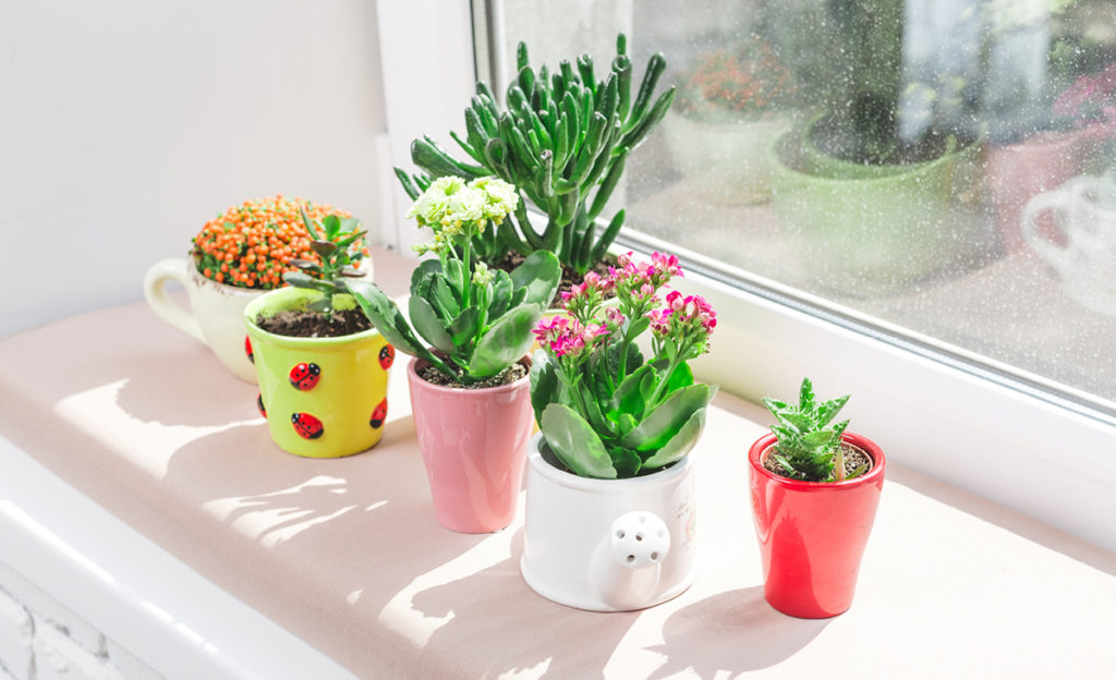 [Растения в доме] 5 красивых комнатных растений для тесной квартиры