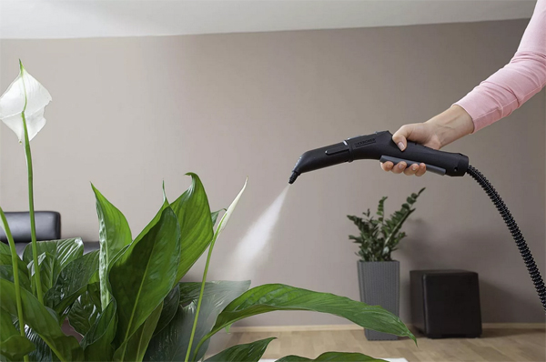 [Растения в доме] Правила очищения комнатных цветов
