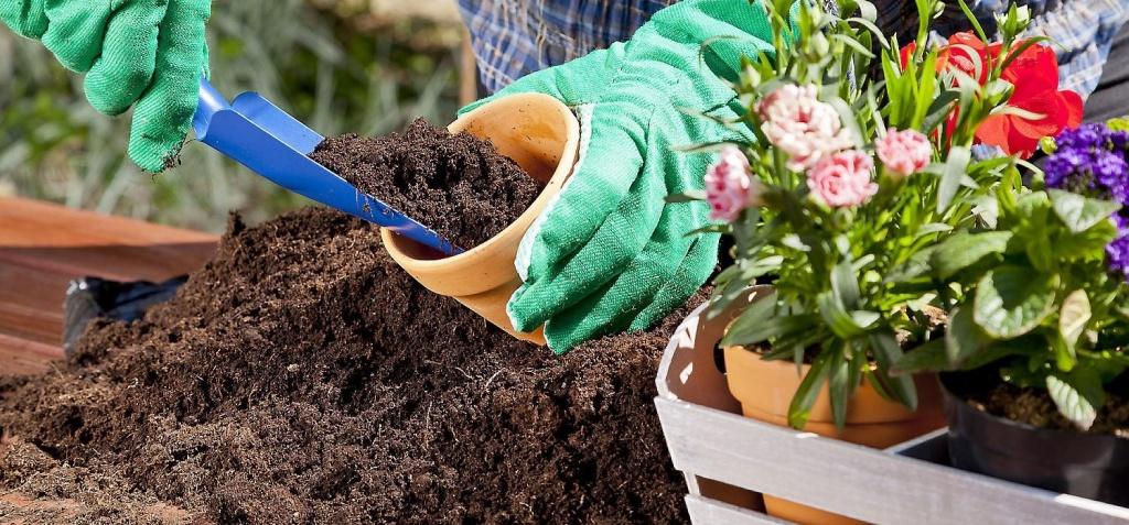 Как пересадить цветок в другой горшок: пошаговая инструкция