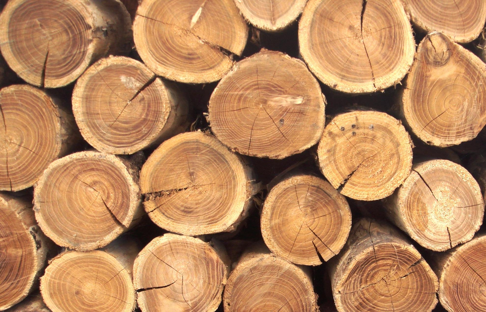 Геометрическая резьба по дереву для новичков: сфера применения, выбор материала, базовые инструменты