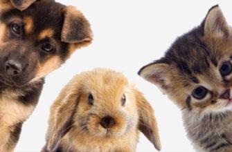 Отделка стен в доме с домашними животными